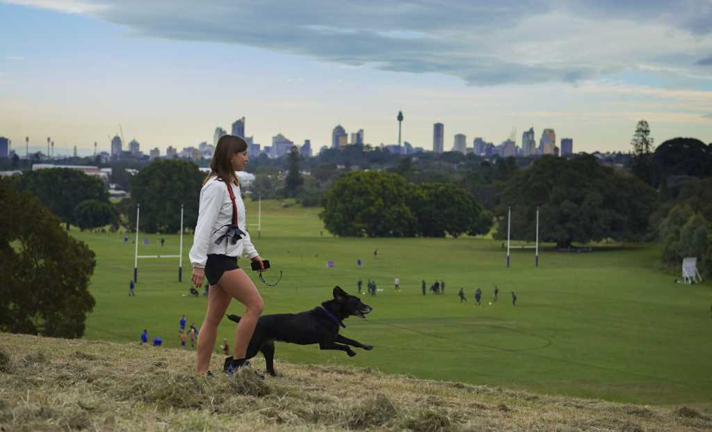 Pet-Friendly Holiday Spots in Sydney and NSW